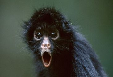 Monkey in shock