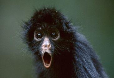 Monkey in shock